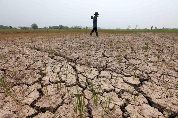 A farmer walks through his dry rice field.